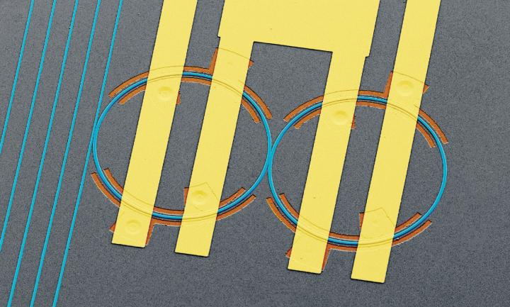 Light Is Dynamically Controlled in a Programmable Electro-Optic System